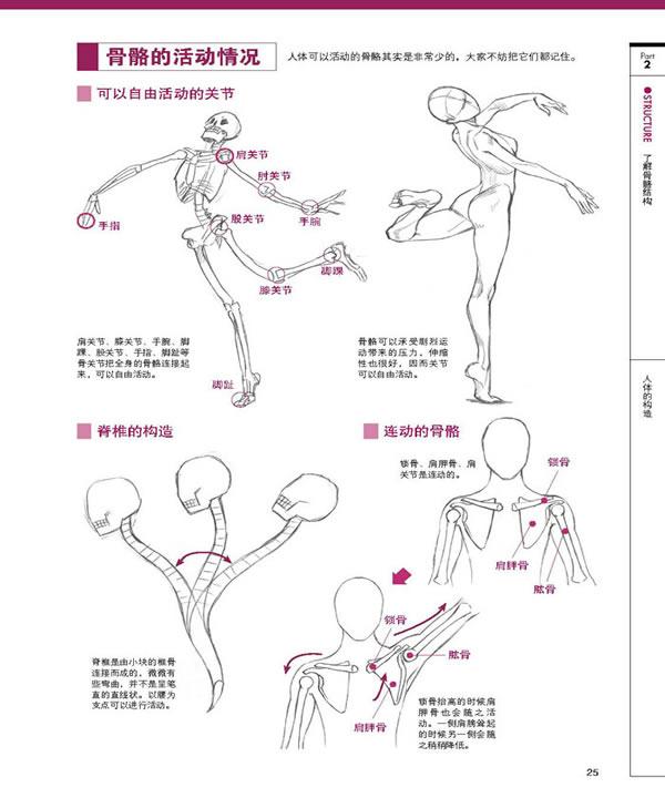 卡通人体结构示意图