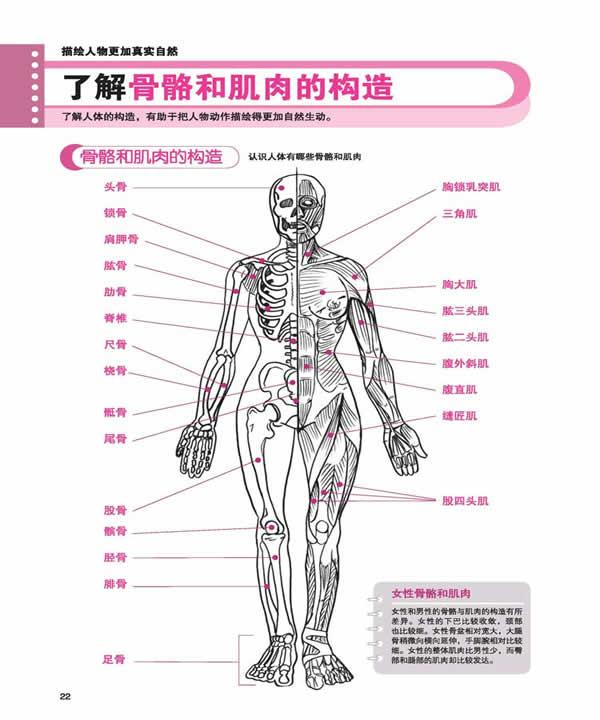 了解骨骼和肌肉的构造(1)